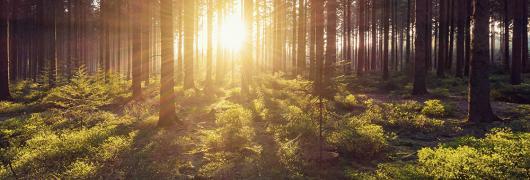 silvicultura de precisión